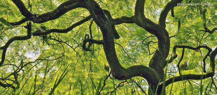 Bist du unterernährt oder wie ein starker Baum