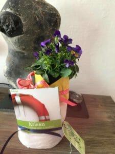 Blumen plus Impulsheft https://down-to-earth.de/allgemein/gemeinde-leben-trotz-corona/?utm_source=ActiveCampaign&utm_medium=email&utm_content=Gemeinde+leben+trotz+Corona&utm_campaign=NL+-+Extra+-+Gemeinde+leben+trotz+Corona
